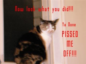 bitch blog kitty diw