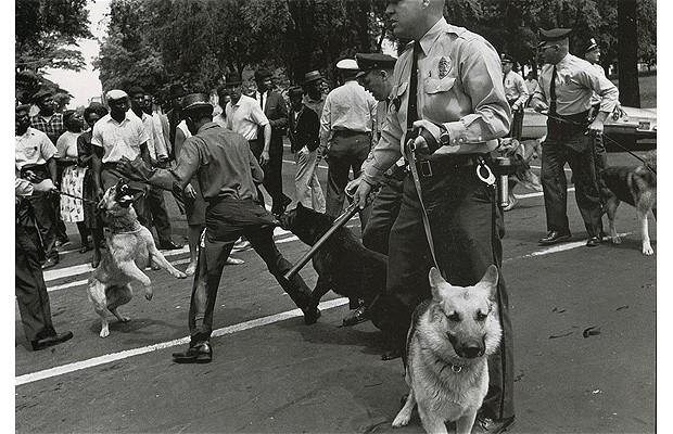 Police_Dogs_Attack_1872706i